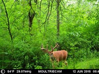 Prime Hunting Land : Blue River : Richland County : Wisconsin