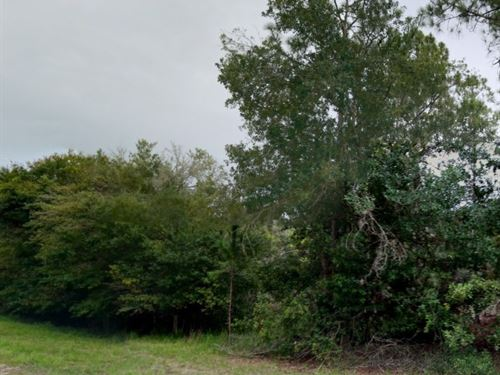 Polk County, Fl $32,500 Negotiable : Indian Lake Estates : Polk County : Florida