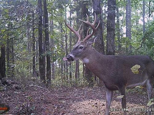 Price Reduced, 3.5 Acres With : Dennard : Van Buren County : Arkansas