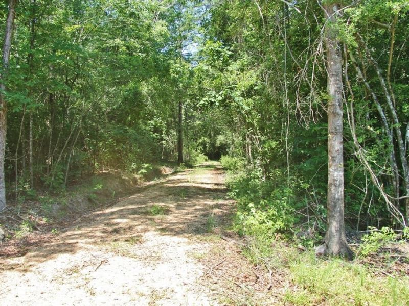 9 Acres Land For Sale Mixed Timber Magnolia Pike County Mississippi