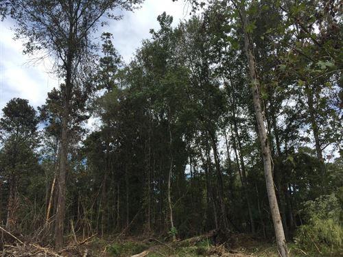 8.42 Acres in Independence, Louisiana : Independence : Tangipahoa Parish : Louisiana