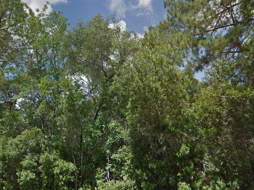 Putnam County, Fl $31,000 Neg : Palatka : Putnam County : Florida