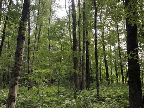 Van Buren Woods : Camden : New York County : New York