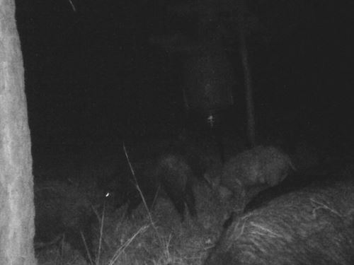 Hidden Forest : Conroe : Montgomery County : Texas