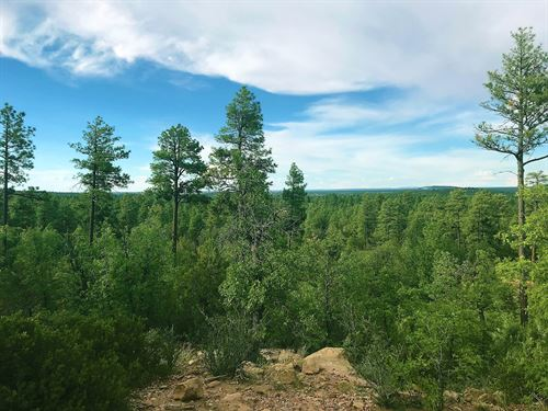 Arizona 10 Acre Forested Estates : Pinetop-Lakeside : Navajo County : Arizona