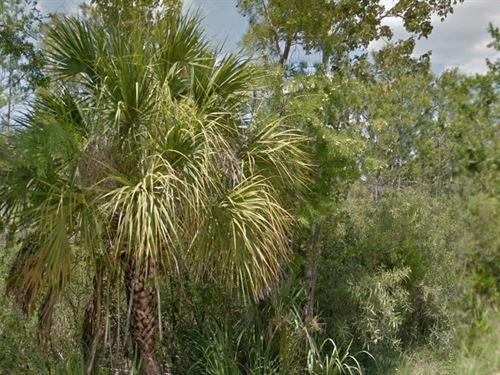 Collier County, Fl $34,500 Neg : Rural Estates : Collier County : Florida