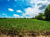 Farmland Auction : Springville : Greene County : Indiana