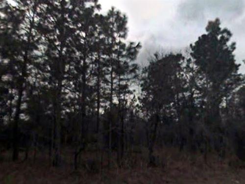 Marion County, Fl $40,000 Neg : Ocala : Marion County : Florida