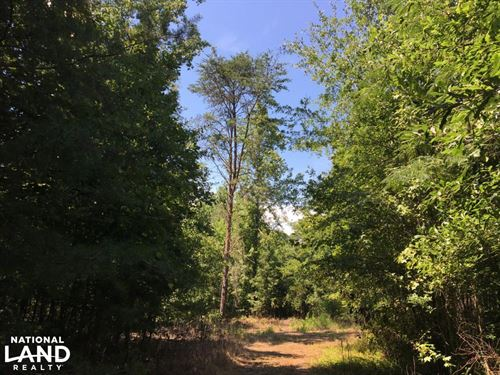 Wooded Greenville County Homesite : Greenville : South Carolina