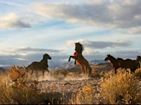 Wild Horse Canyon : Montello : Elko County : Nevada