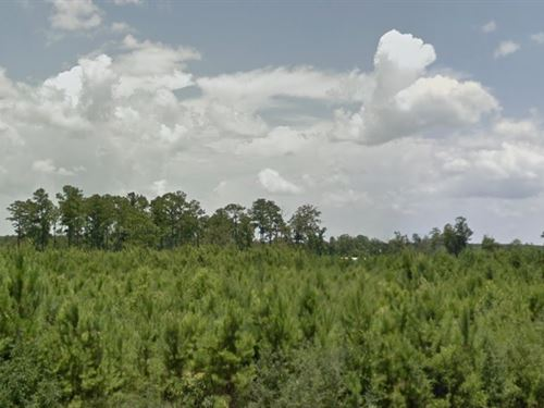 Tyler County, Tx $18,000 Neg : Woodville : Tyler County : Texas