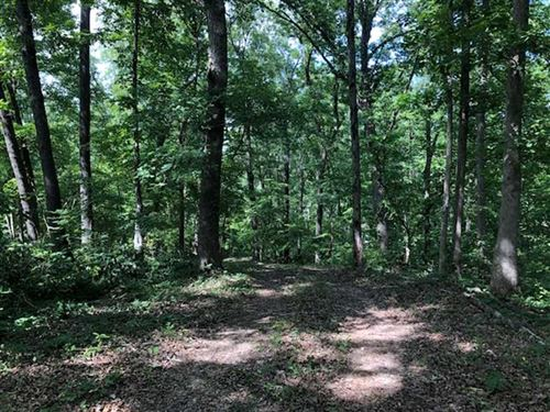 5 Acres With Cabin Close to The : Stover : Morgan County : Missouri