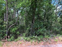 .12 Acre Wooded Lot 776116 : Old Town : Levy County : Florida