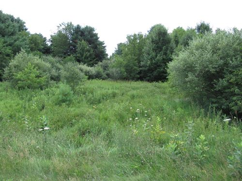 Wooded Acreage With Creek : Custer : Mason County : Michigan
