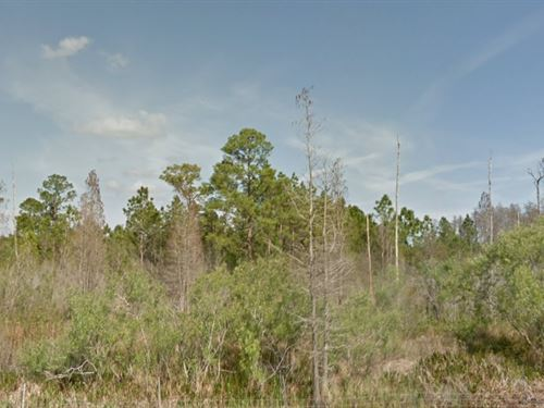 Polk County, Fl $50,000 Negotiable : Polk City : Polk County : Florida