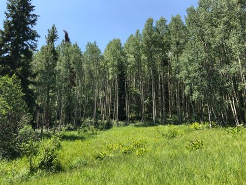 9453899, Extremely Lush & Gree : Garfield : Chaffee County : Colorado