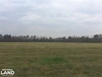Effingham Mini Farm : Effingham : Florence County : South Carolina