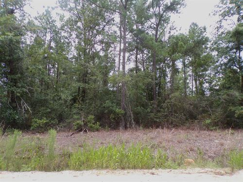 Satilla River Area Homesite Lot 9 : Waynesville : Brantley County : Georgia