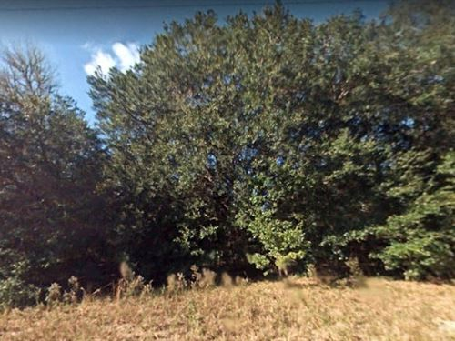 .29 Acres In Summerfield, FL : Summerfield : Marion County : Florida