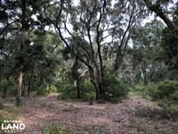 St, Helena Private Wooded Future Es : Saint Helena Island : Beaufort County : South Carolina