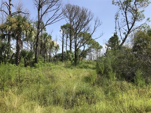 6000 Acre Preserve In Your Backyard : North Port : Sarasota County : Florida