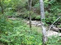 Beautiful Kentucky Mountain Land : Monticello : Wayne County : Kentucky