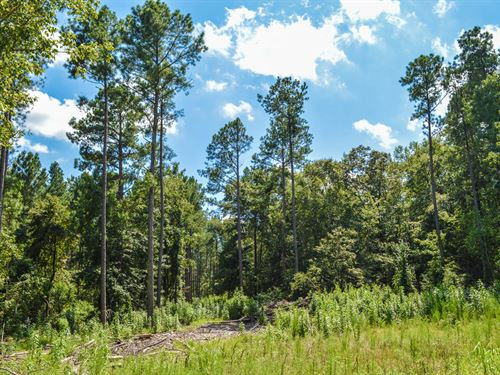 10.5 Acre Wooded Tract In Moore, Sc : Woodruff : Spartanburg County : South Carolina