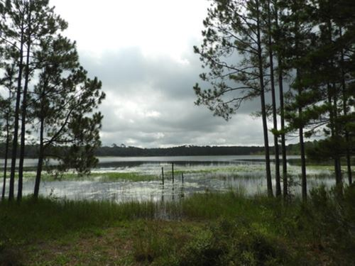 9 Ac Wooded Parcel A-575 : Hawthorne : Putnam County : Florida