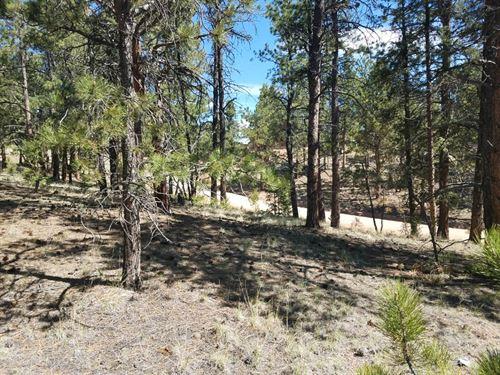 Colorado Mountain Lot, Private : Florissant : Teller County : Colorado