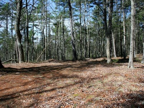 Wooded Lot in Rural Subdivision : Doe Hill : Highland County : Virginia