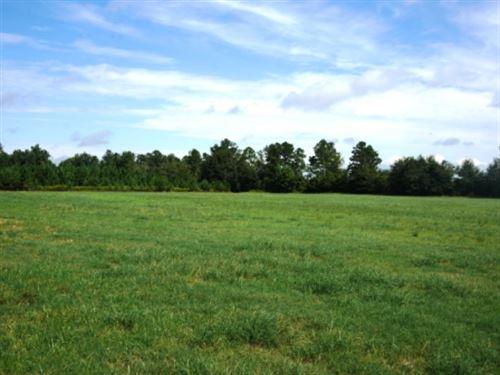 Johnny White Farm Tract 2 : Nevils : Bulloch County : Georgia