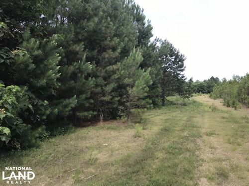 7 Acres Timberland : Paron : Saline County : Arkansas