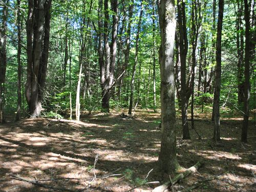 Pine-Wooded Lot For Building 2 : Vienna : Oneida County : New York