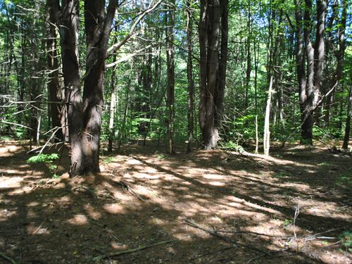 Pine-Wooded Lot For Building 3 : Vienna : Oneida County : New York