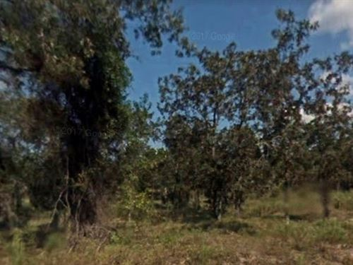 Wooded Lot For Sale : Marion : Florida
