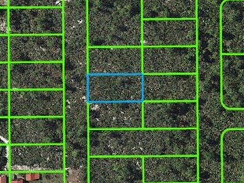 Wooded Lot For Sale In Highlands Co : Lake Placid : Highlands County : Florida