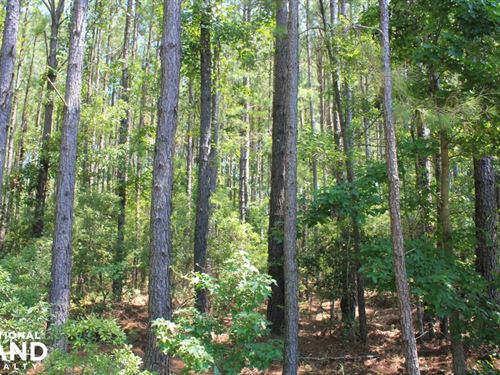 Moncks Corner Large Acreage Homesit : Moncks Corner : Berkeley County : South Carolina