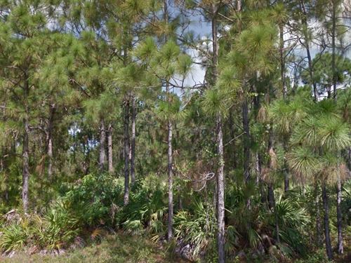 Lee County, Fl $24,500 Negotiable : Lehigh Acres : Lee County : Florida