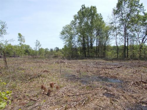 Secluded And Clean 8 Acres : Simms : Bowie County : Texas