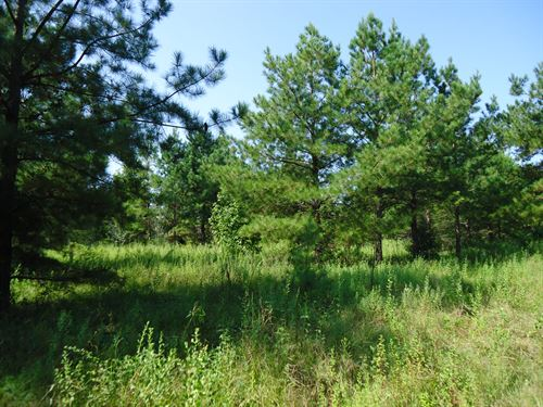 Country Home Site - Well & Septic : Unadilla : Pulaski County : Georgia