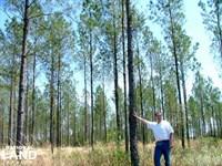 The Old Brady Road Lot 2 : Robertsdale : Baldwin County : Alabama