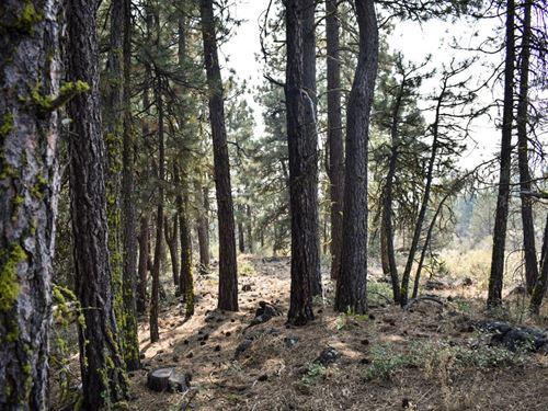 4.8 Acres In Bonanza, OR : Bonanza : Klamath County : Oregon