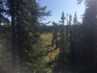 Raw Land, Wooded, Creek, Off Grid : Kasilof : Kenai Peninsula Borough : Alaska