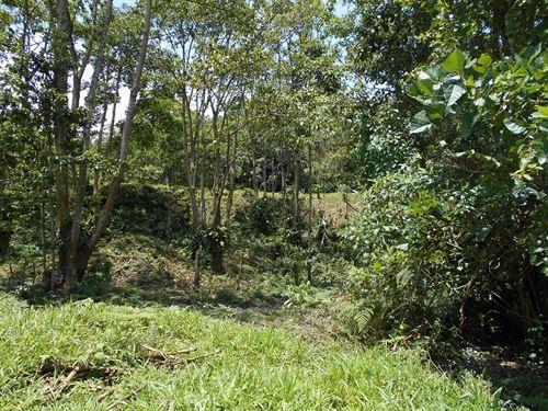 11 Ac Private Jungle Tract, Creek : Florenica De Turrialba : Costa Rica
