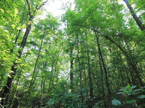 120 Hidden Falls Ct : Rutledge : Morgan County : Georgia