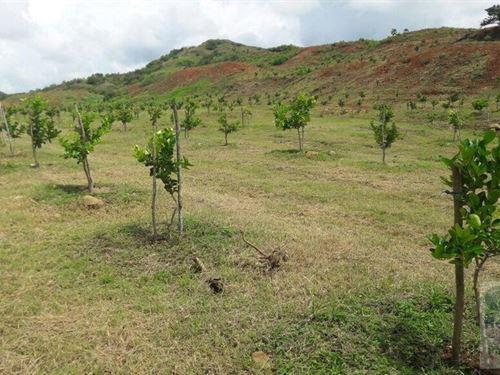 Land/Farm For Sale Penonome Panama : Penonomé : Panama