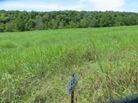 Waterfront Property Northern : Clarkridge : Baxter County : Arkansas