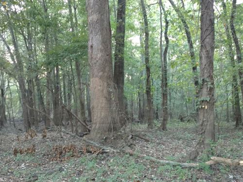 Hunting Property Timber Property : Pocahontas : Randolph County : Arkansas