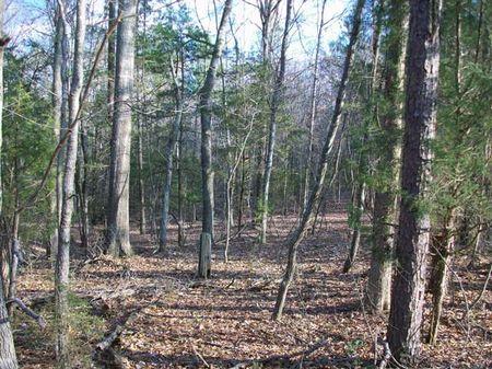 Hunting Season Campsite : Enoree : Union County : South Carolina