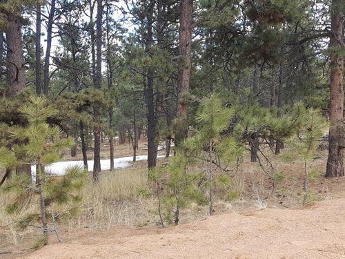 Mountain Lot, Teller County, 2 : Florissant : Teller County : Colorado